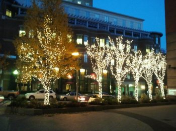 trees with christmas lights, downtown Boston
