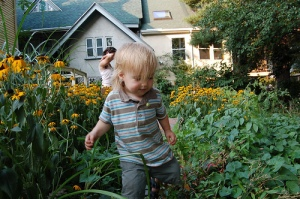 toddler in the garden with black eyed susans